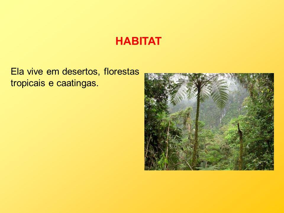 HABITAT Ela vive em desertos, florestas tropicais e caatingas.