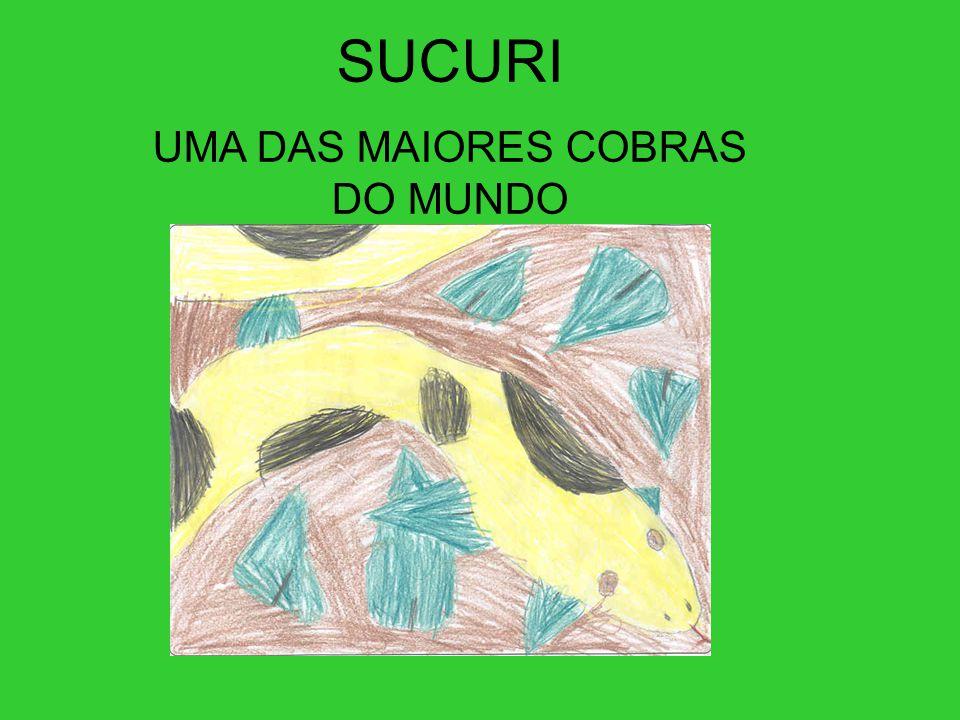 SUCURI UMA DAS MAIORES COBRAS DO MUNDO