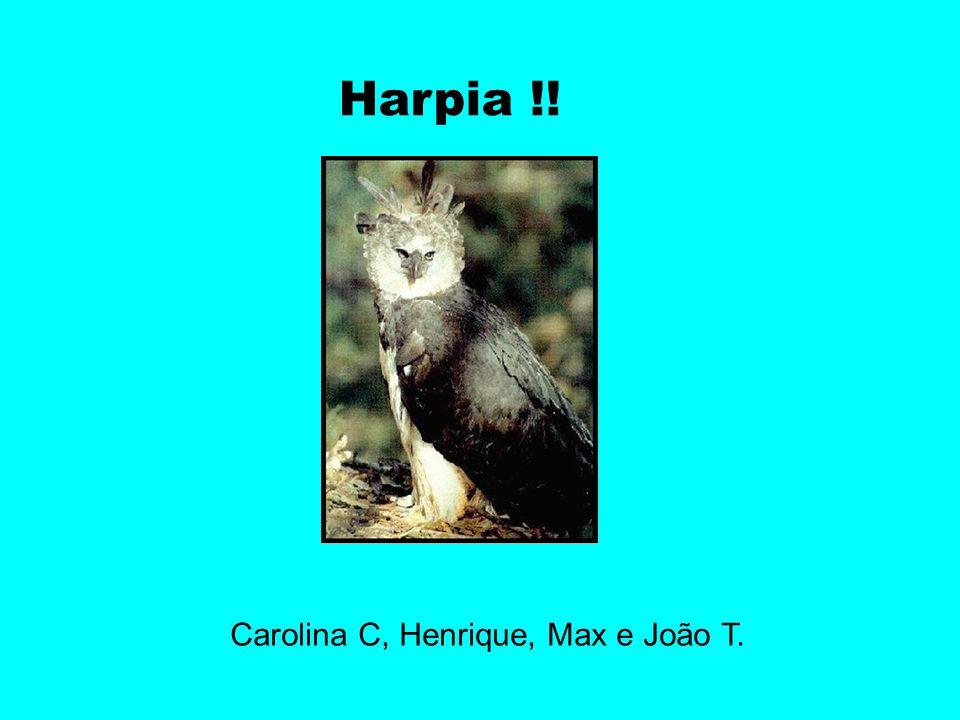 Harpia !! Carolina C, Henrique, Max e João T.