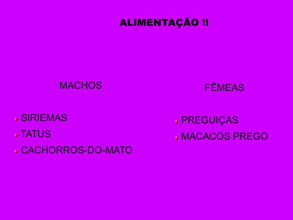 MACHOS SIRIEMAS TATUS CACHORROS-DO-MATO FÊMEAS PREGUIÇAS MACACOS PREGO ALIMENTAÇÃO !!