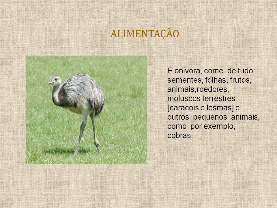 Gestação Os filhotes da Ema pesam 600 gramas.As Emas podem botar de10 a 18 ovos.
