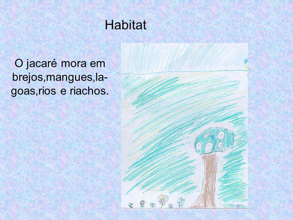 Habitat O jacaré mora em brejos,mangues,la- goas,rios e riachos.