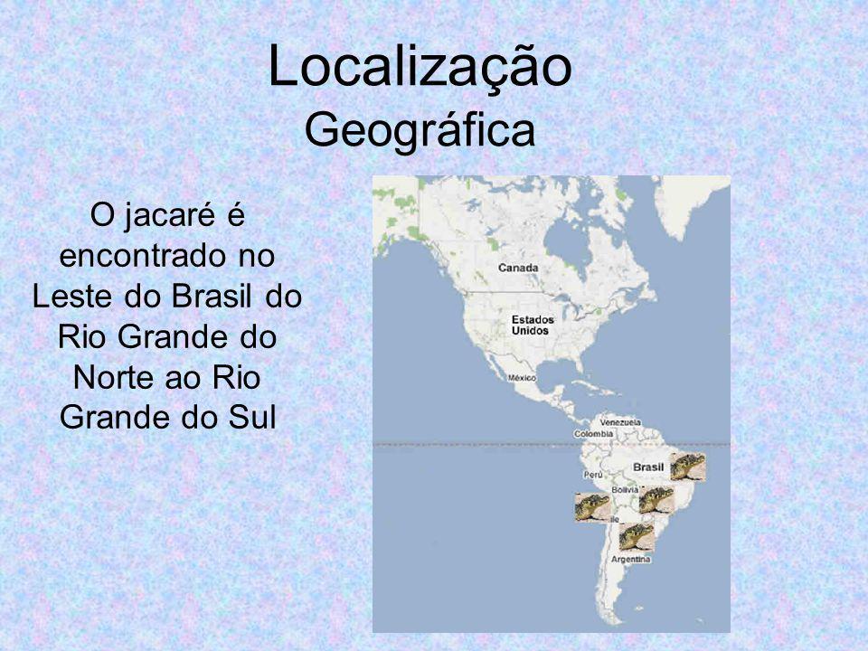 Localização Geográfica O jacaré é encontrado no Leste do Brasil do Rio Grande do Norte ao Rio Grande do Sul