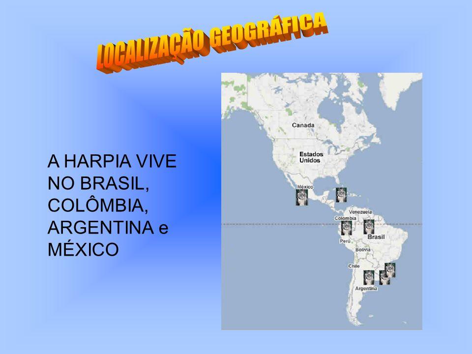A HARPIA VIVE NO BRASIL, COLÔMBIA, ARGENTINA e MÉXICO
