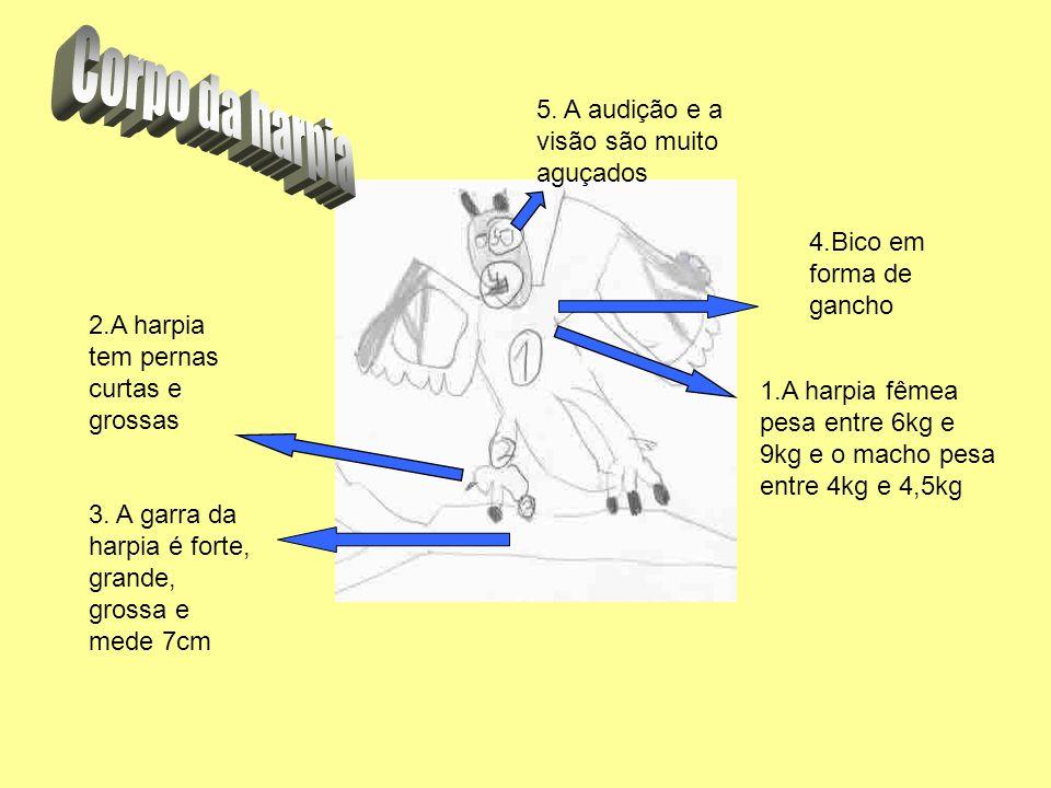 3. A garra da harpia é forte, grande, grossa e mede 7cm 2.A harpia tem pernas curtas e grossas 4.Bico em forma de gancho 5. A audição e a visão são mu