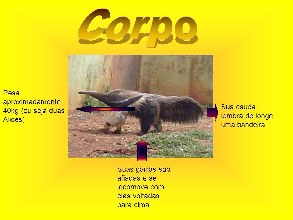 Pesa aproximadamente 40kg (ou seja duas Alices) Suas garras são afiadas e se locomove com elas voltadas para cima.