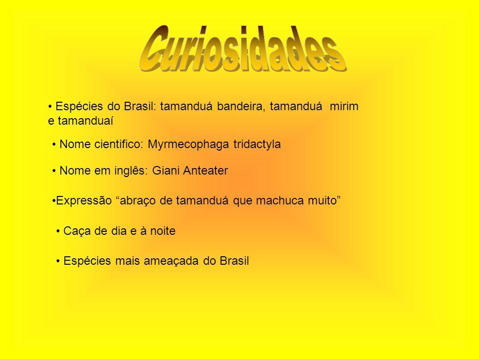 Espécies do Brasil: tamanduá bandeira, tamanduá mirim e tamanduaí Nome cientifico: Myrmecophaga tridactyla Nome em inglês: Giani Anteater Expressão ab