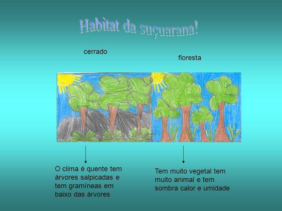 O clima é quente tem árvores salpicadas e tem gramíneas em baixo das árvores Tem muito vegetal tem muito animal e tem sombra calor e umidade cerrado f