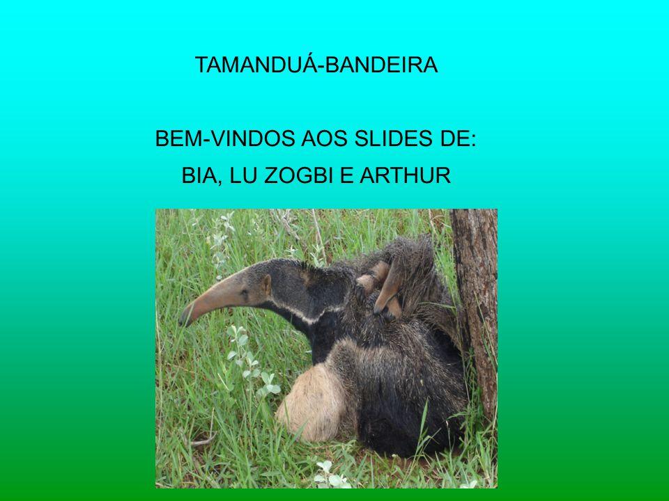 TAMANDUÁ-BANDEIRA BEM-VINDOS AOS SLIDES DE: BIA, LU ZOGBI E ARTHUR