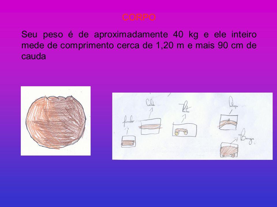 CORPO Seu peso é de aproximadamente 40 kg e ele inteiro mede de comprimento cerca de 1,20 m e mais 90 cm de cauda