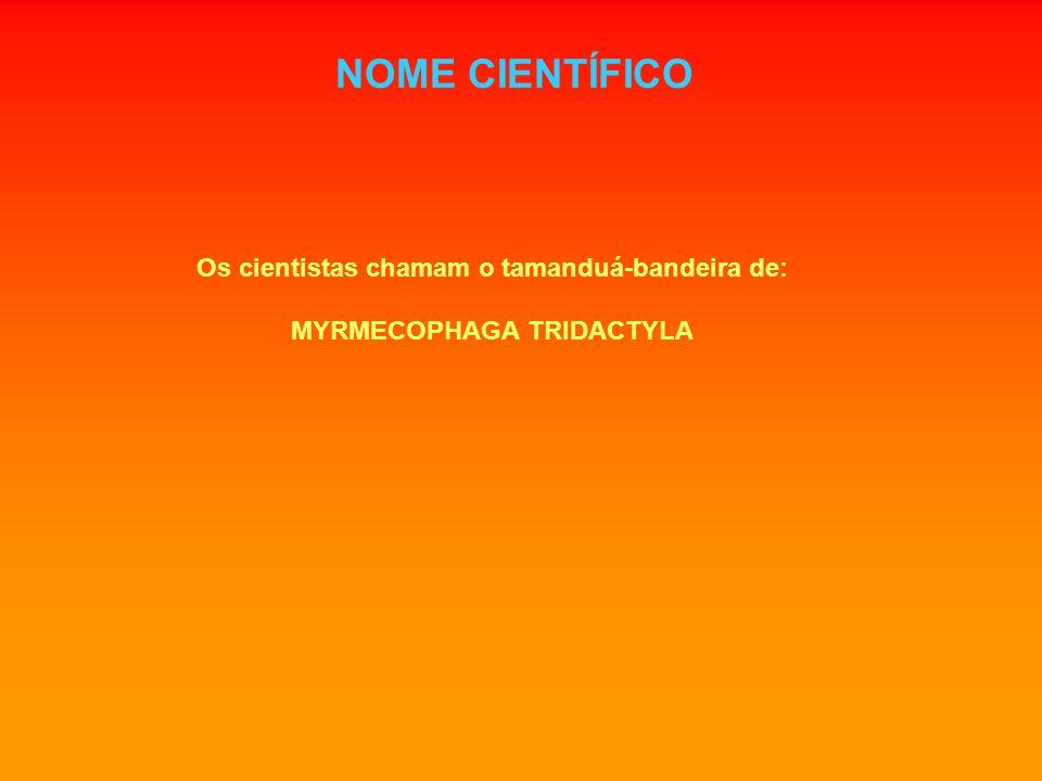 NOME CIENTÍFICO Os cientistas chamam o tamanduá-bandeira de: MYRMECOPHAGA TRIDACTYLA