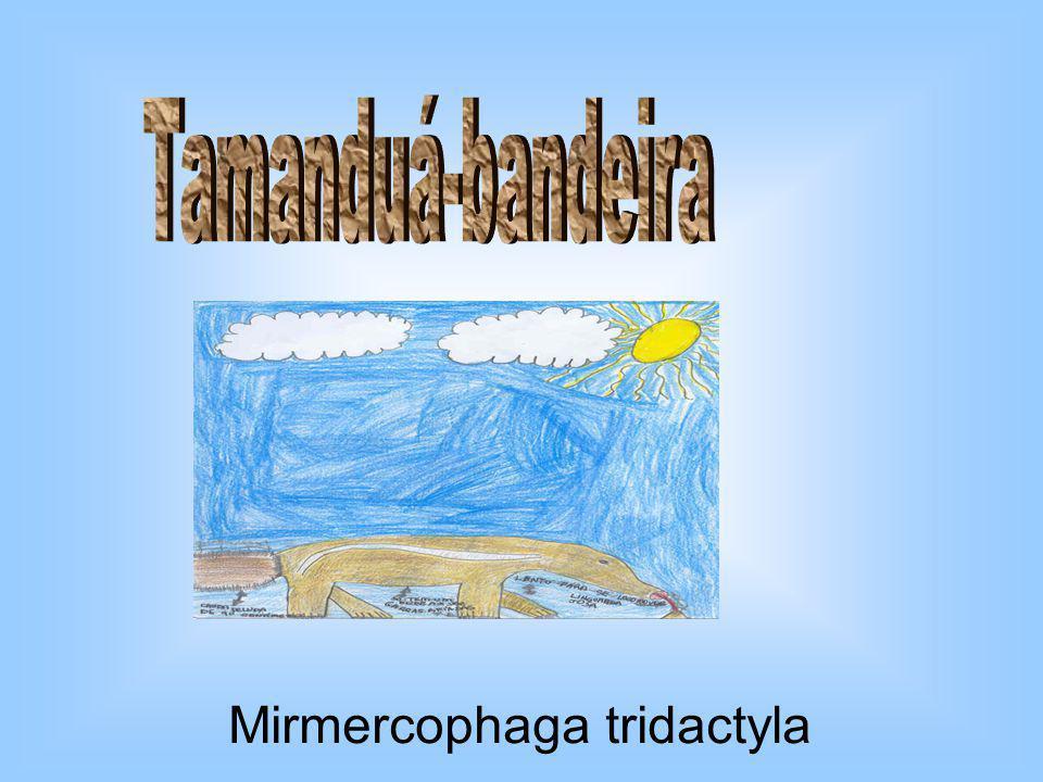 Mirmercophaga tridactyla
