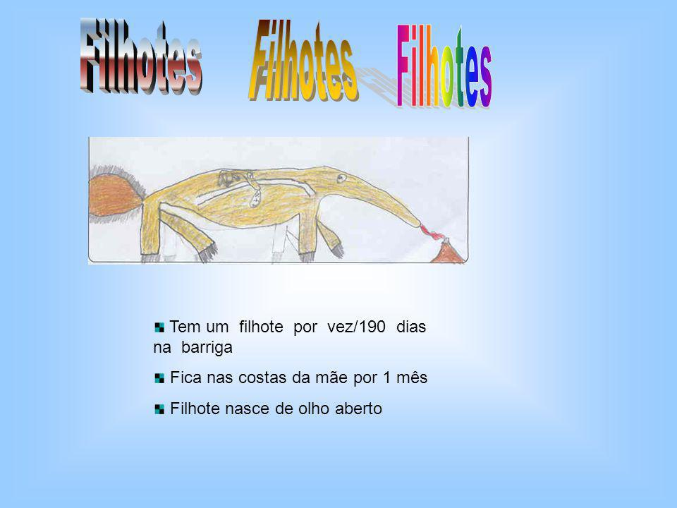 O tamanduá é encontrado nas Américas do Sul e Central.