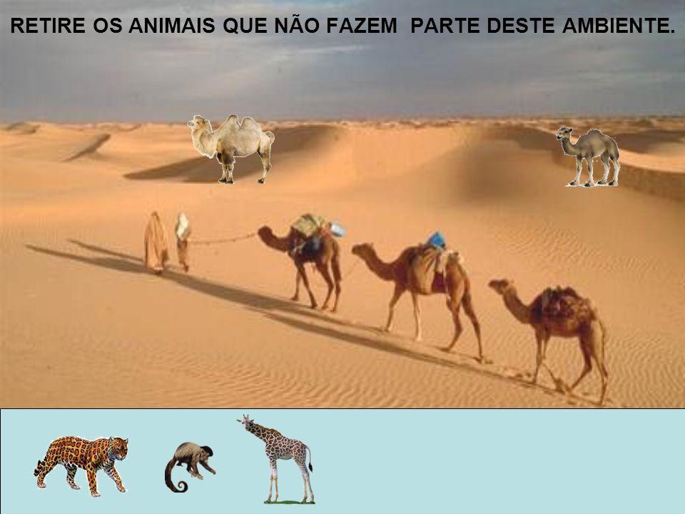 RETIRE OS ANIMAIS QUE NÃO FAZEM PARTE DESTE AMBIENTE.
