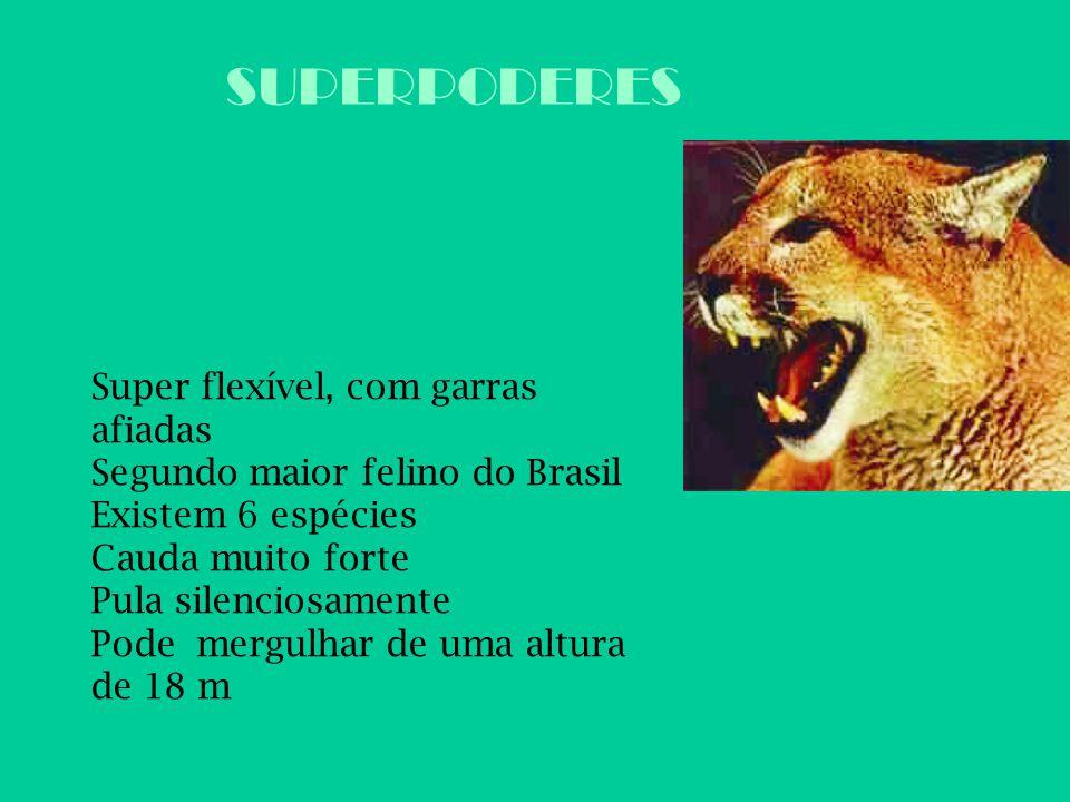 SUPERPODERES Super flexível, com garras afiadas Segundo maior felino do Brasil Existem 6 espécies Cauda muito forte Pula silenciosamente Pode mergulha