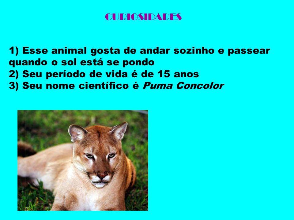 CURIOSIDADES 1) Esse animal gosta de andar sozinho e passear quando o sol está se pondo 2) Seu período de vida é de 15 anos 3) Seu nome científico é P