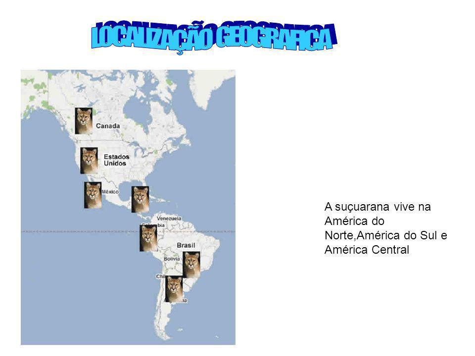 A suçuarana vive na América do Norte,América do Sul e América Central
