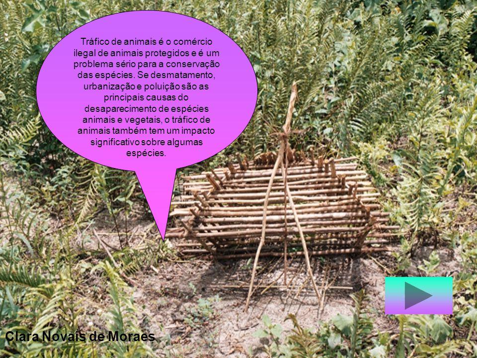 Queima de vegetação e desmatamentos com o intuito de aumentar as áreas de cultivo e pastagens, bem como facilitar a ocupação humana, causam a destruiç