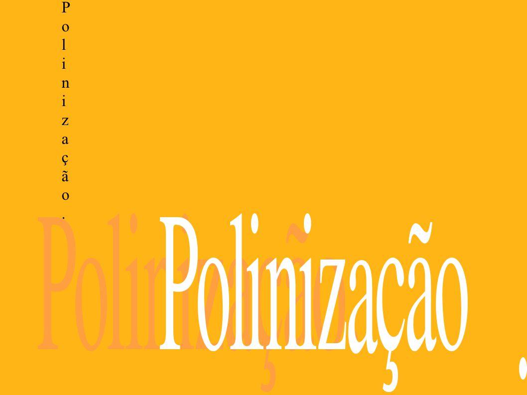 Polinização - Polinização - é o transporte do pólen dos estames de uma flor até a parte feminina de outra; deste modo, obtêm-se as sementes que produzirão uma nova planta.
