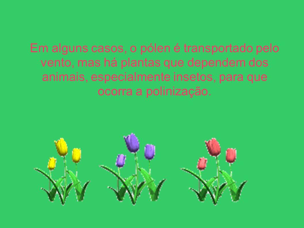 Em alguns casos, o pólen é transportado pelo vento, mas há plantas que dependem dos animais, especialmente insetos, para que ocorra a polinização.