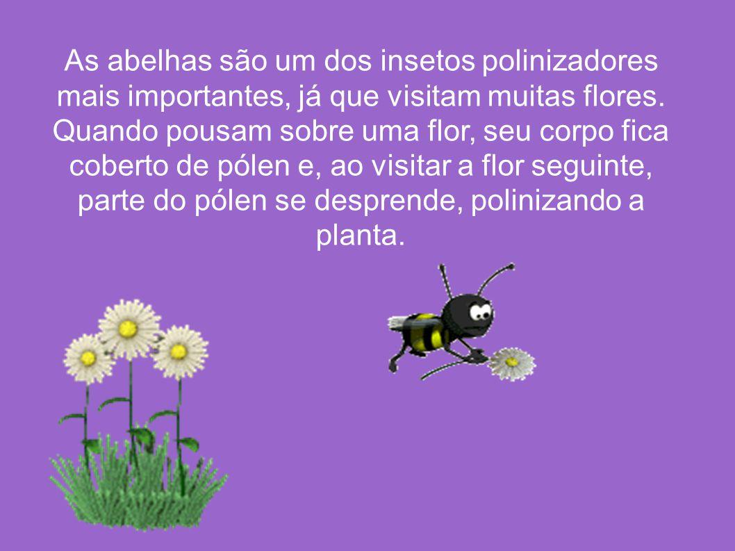 As abelhas são um dos insetos polinizadores mais importantes, já que visitam muitas flores. Quando pousam sobre uma flor, seu corpo fica coberto de pó