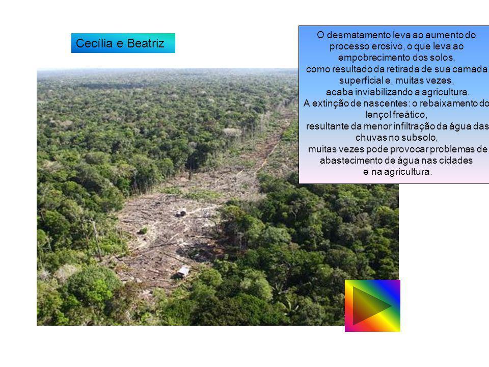 O desmatamento leva ao aumento do processo erosivo, o que leva ao empobrecimento dos solos, como resultado da retirada de sua camada superficial e, mu