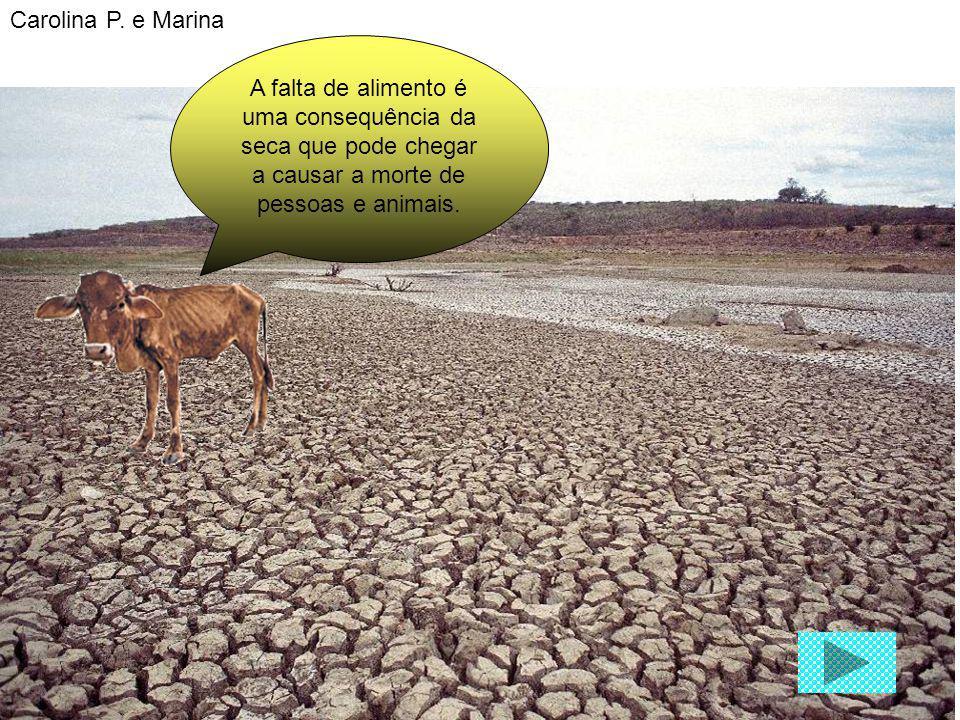 A falta de alimento é uma consequência da seca que pode chegar a causar a morte de pessoas e animais. Carolina P. e Marina
