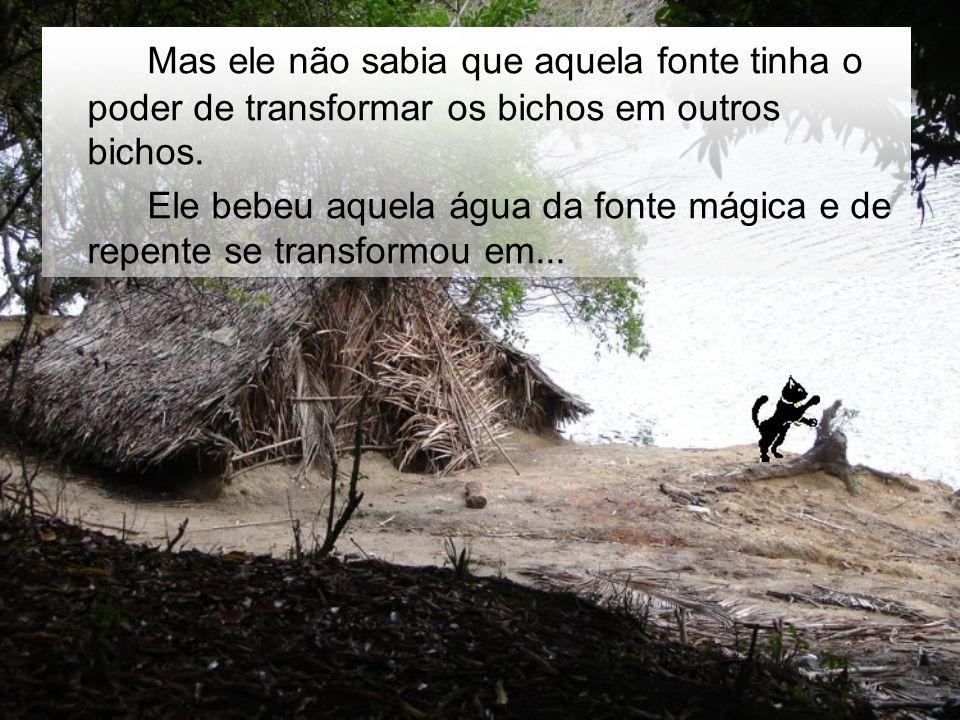 Ele continuou a andar e percebeu que a floresta era mágica.