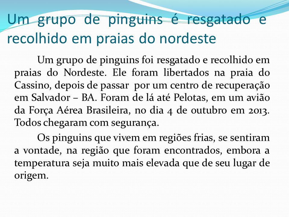 Um grupo de pinguins é resgatado e recolhido em praias do nordeste Um grupo de pinguins foi resgatado e recolhido em praias do Nordeste. Ele foram lib