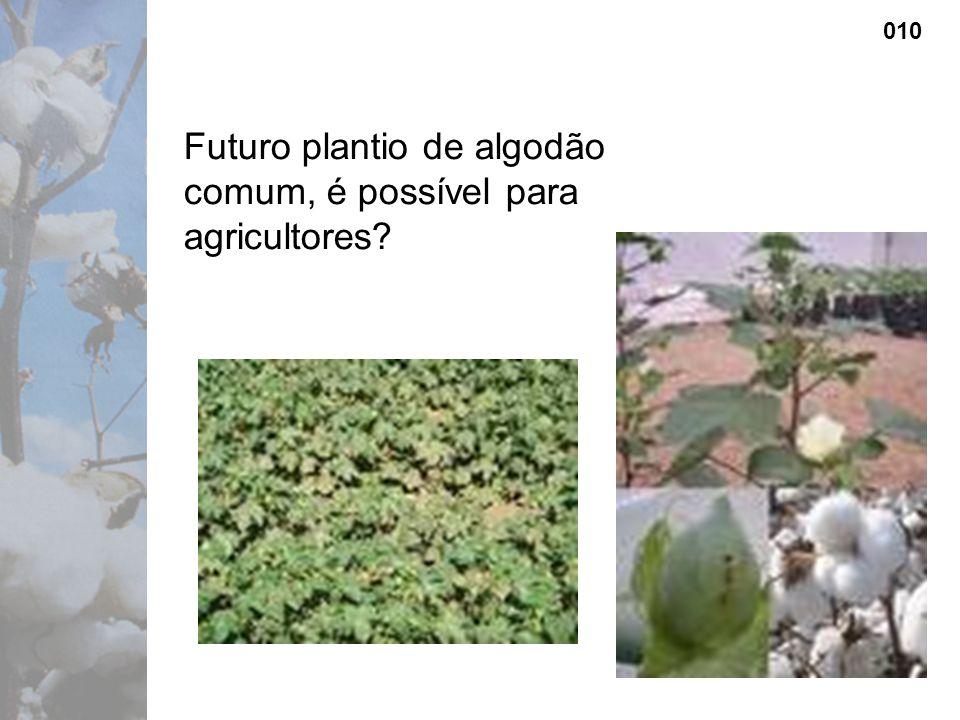 Futuro plantio de algodão comum, é possível para agricultores 010