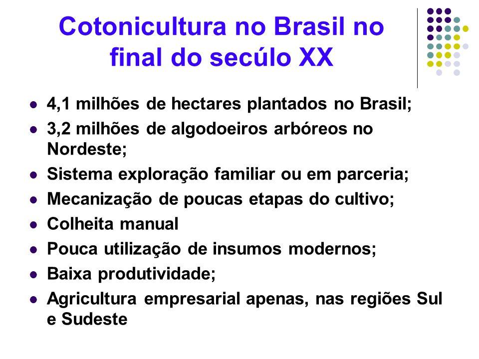 Cotonicultura no Brasil no final do secúlo XX 4,1 milhões de hectares plantados no Brasil; 3,2 milhões de algodoeiros arbóreos no Nordeste; Sistema ex