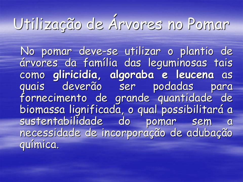Utilização de Árvores no Pomar No pomar deve-se utilizar o plantio de árvores da família das leguminosas tais como gliricidia, algoraba e leucena as q