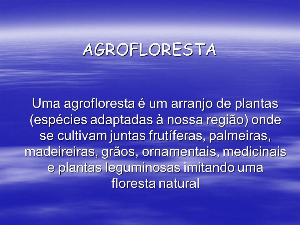 AGROFLORESTA Uma agrofloresta é um arranjo de plantas (espécies adaptadas à nossa região) onde se cultivam juntas frutíferas, palmeiras, madeireiras,