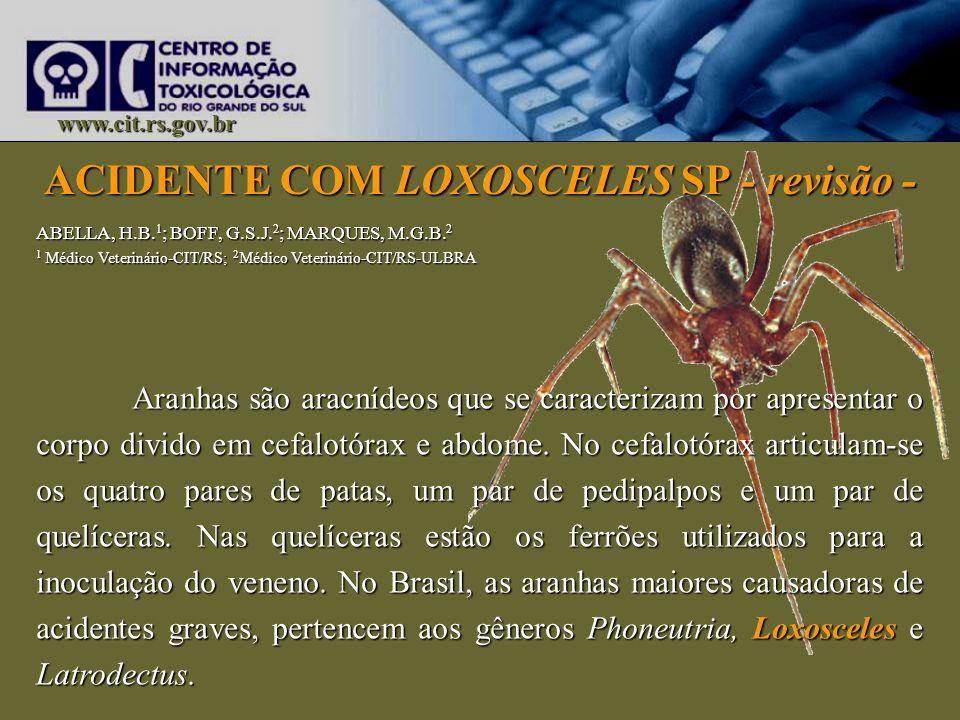 ACIDENTE COM LOXOSCELES SP - revisão - www.cit.rs.gov.br Aranhas são aracnídeos que se caracterizam por apresentar o corpo divido em cefalotórax e abd