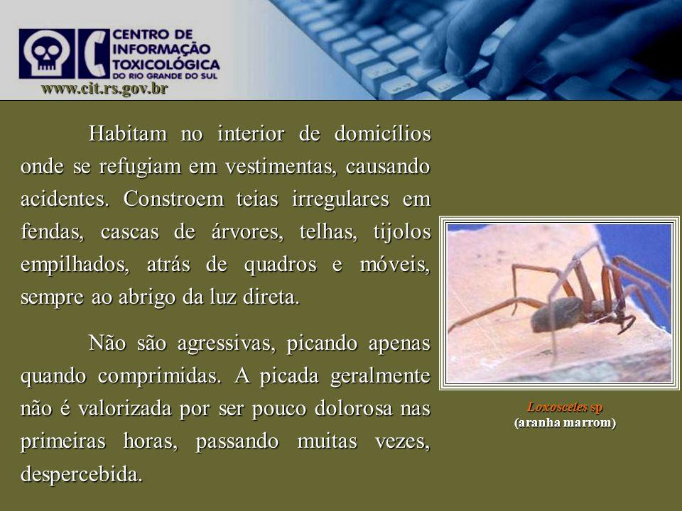 www.cit.rs.gov.br Habitam no interior de domicílios onde se refugiam em vestimentas, causando acidentes. Constroem teias irregulares em fendas, cascas