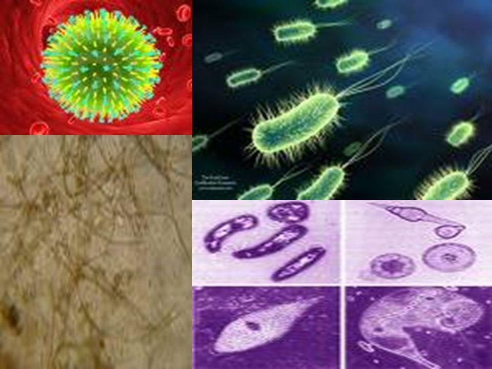 Como a influenza humana (Gripe comum) é transmitida.