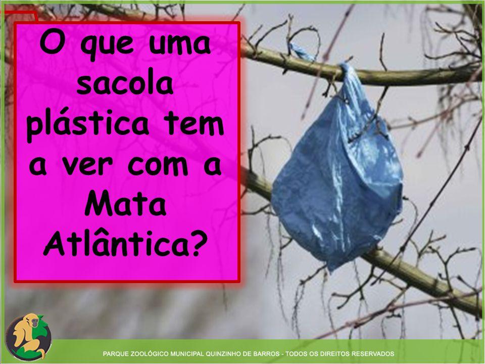 O que uma sacola plástica tem a ver com a Mata Atlântica?