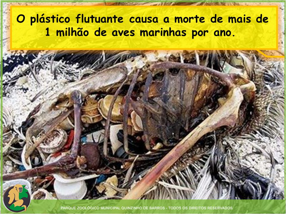 O plástico flutuante causa a morte de mais de 1 milhão de aves marinhas por ano.