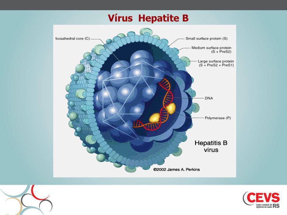 Os principais objetivos das diferentes estratégias de vacinação contra hepatite B são: Prevenir a doença aguda; Impedir a cronificação da hepatopatia, sua evolução para cirrose e/ou hepatocarcinoma; Contribuir para minimizar a transmissão viral.