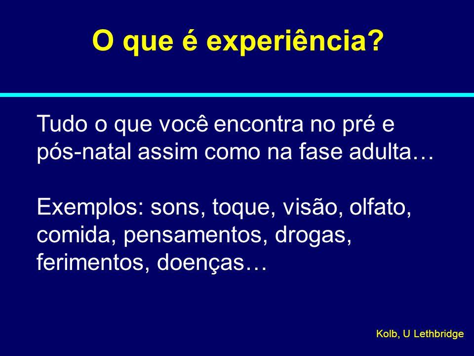 O que é experiência.