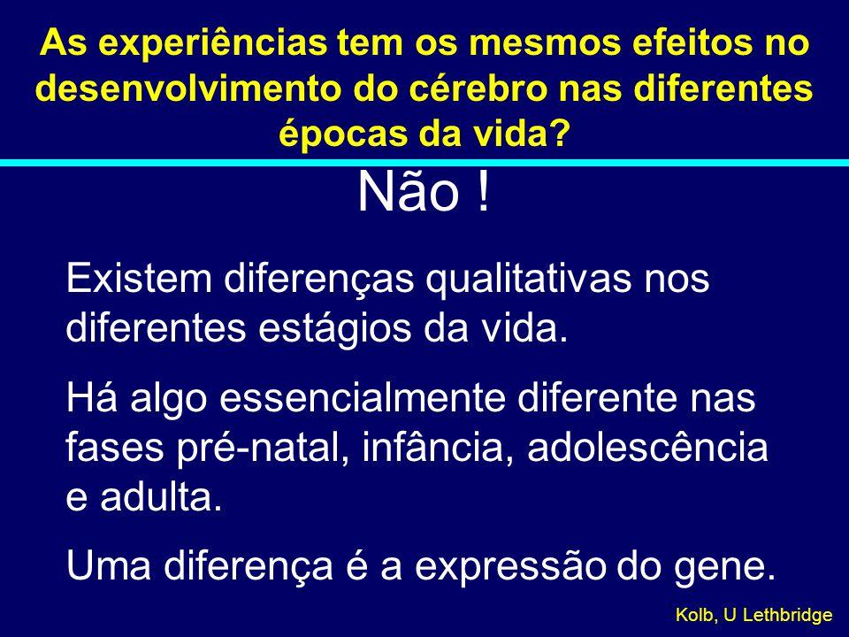 As experiências tem os mesmos efeitos no desenvolvimento do cérebro nas diferentes épocas da vida? Não ! Existem diferenças qualitativas nos diferente