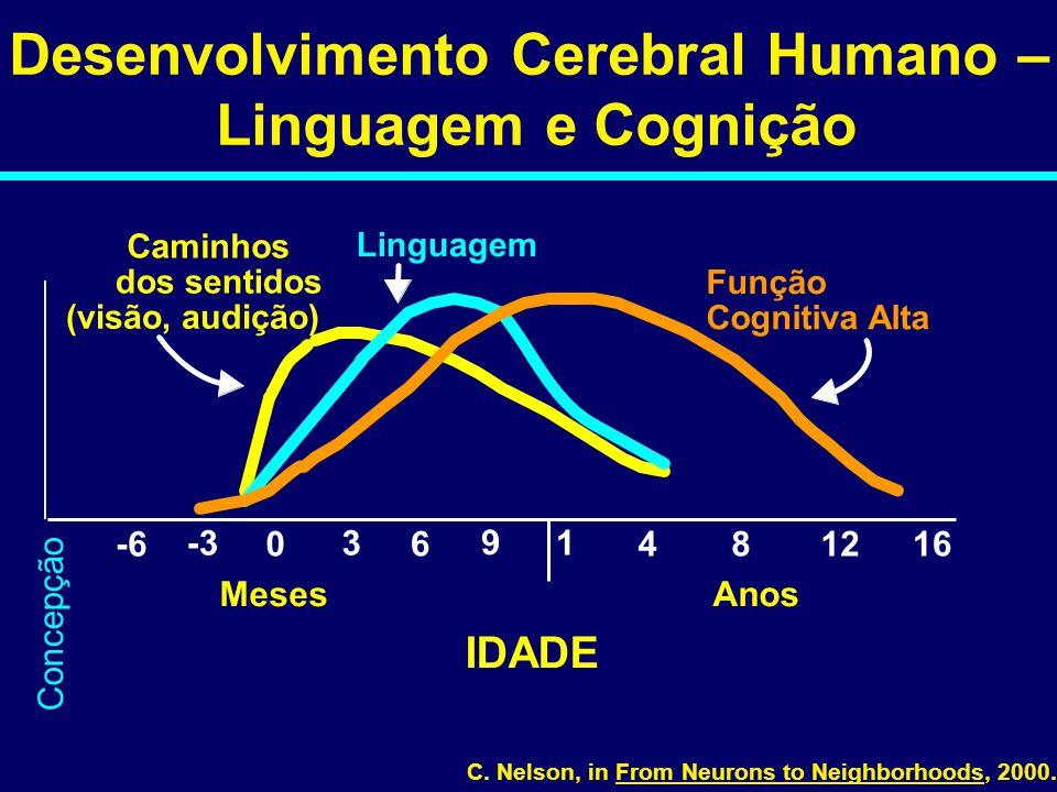 0 1 481216 IDADE Desenvolvimento Cerebral Humano – Linguagem e Cognição Caminhos dos sentidos (visão, audição) Linguagem Função Cognitiva Alta 3 6 9 -3 -6 MesesAnos C.