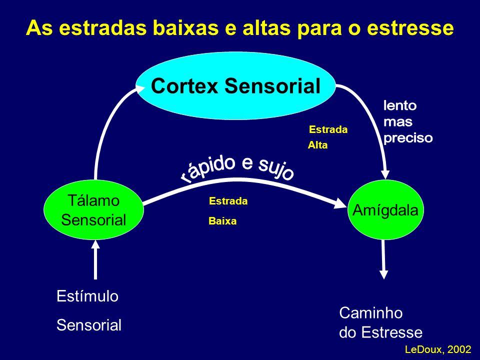 LeDoux, 2002 As estradas baixas e altas para o estresse Amygdala Caminho do Estresse Estrada Cortex Sensorial Tálamo Sensorial Amígdala Alta Baixa Est