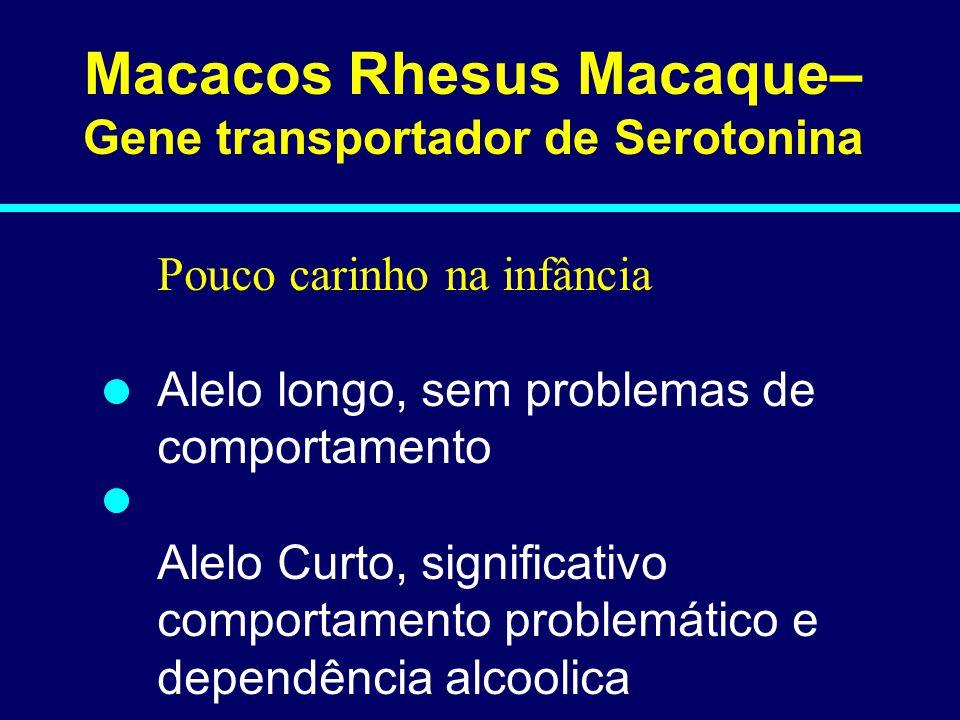 Macacos Rhesus Macaque– Gene transportador de Serotonina Pouco carinho na infância Alelo longo, sem problemas de comportamento Alelo Curto, significativo comportamento problemático e dependência alcoolica 06-028