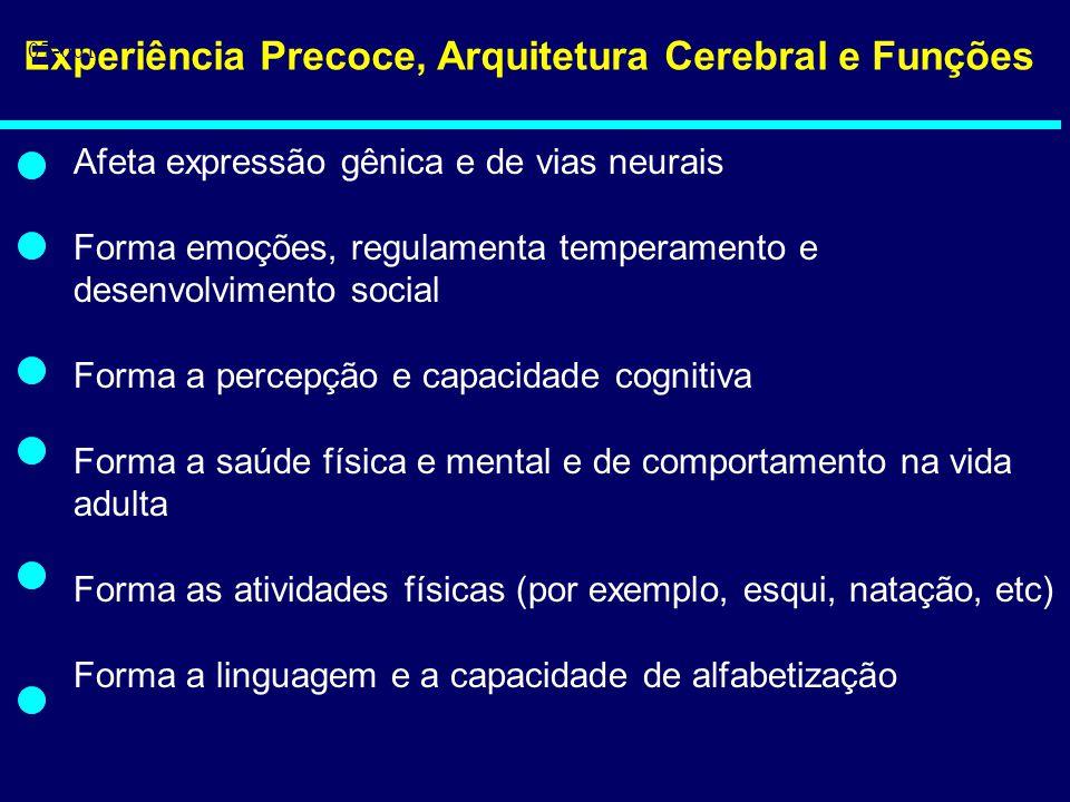 Experiência Precoce, Arquitetura Cerebral e Funções Afeta expressão gênica e de vias neurais Forma emoções, regulamenta temperamento e desenvolvimento