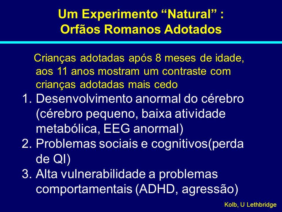 Um Experimento Natural : Orfãos Romanos Adotados Crianças adotadas após 8 meses de idade, aos 11 anos mostram um contraste com crianças adotadas mais cedo 1.Desenvolvimento anormal do cérebro (cérebro pequeno, baixa atividade metabólica, EEG anormal) 2.Problemas sociais e cognitivos(perda de QI) 3.Alta vulnerabilidade a problemas comportamentais (ADHD, agressão) Kolb, U Lethbridge 08-031