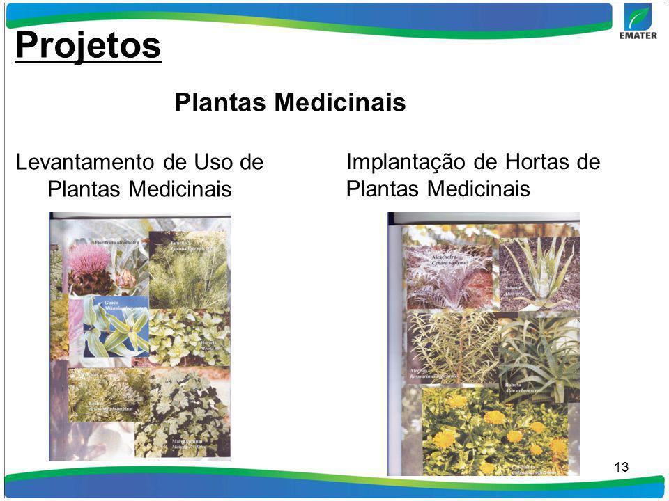 13 Levantamento de Uso de Plantas Medicinais Implantação de Hortas de Plantas Medicinais Projetos Plantas Medicinais