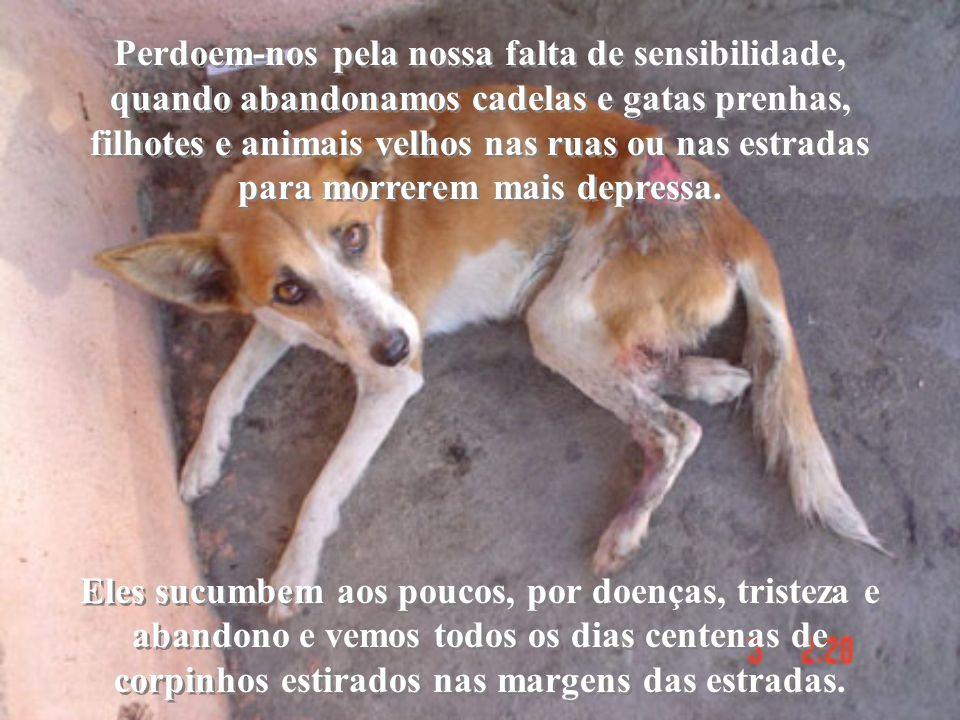 Perdoem-nos pela nossa falta de sensibilidade, quando abandonamos cadelas e gatas prenhas, filhotes e animais velhos nas ruas ou nas estradas para morrerem mais depressa.
