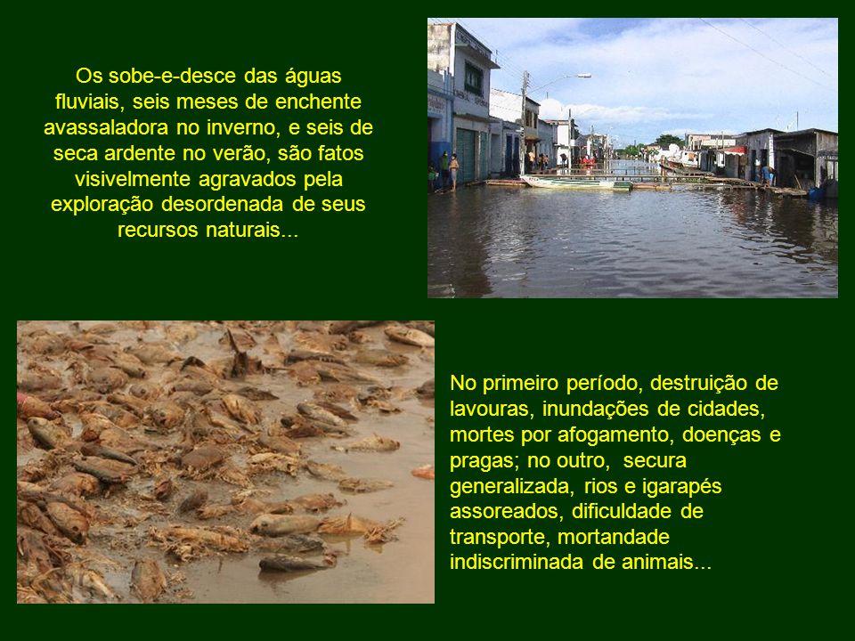No primeiro período, destruição de lavouras, inundações de cidades, mortes por afogamento, doenças e pragas; no outro, secura generalizada, rios e iga