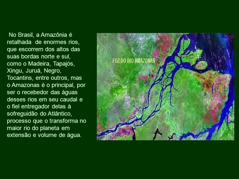 No Brasil, a Amazônia é retalhada de enormes rios, que escorrem dos altos das suas bordas norte e sul, como o Madeira, Tapajós, Xingu, Juruá, Negro, Tocantins, entre outros, mas o Amazonas é o principal, por ser o recebedor das águas desses rios em seu caudal e o fiel entregador delas à sofreguidão do Atlântico, processo que o transforma no maior rio do planeta em extensão e volume de água.